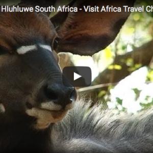 Ubizane African Safari Wildlife Reserve